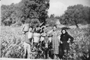 ΤΡΥΓΟΣ 1964. Γ, ΦΩΤΕΙΝΟΣ-ΕΥΓΕΝΙΑ ΚΟΝΣΤΑ- ΑΣΠΑΣΙΑ ΦΩΤΕΙΝΟΥ. Φωτογραφικό αρχείο ΠΙΠΗΣ ΚΟΜΙΑΝΟΣ